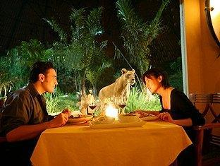 Honeymoon with Animal