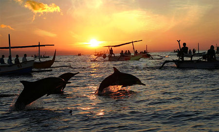 Dolphin   Sunrise Trips