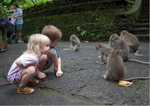Ubud Monkey Forest 1