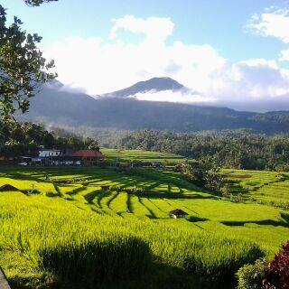 jatiluih_rice_terrace